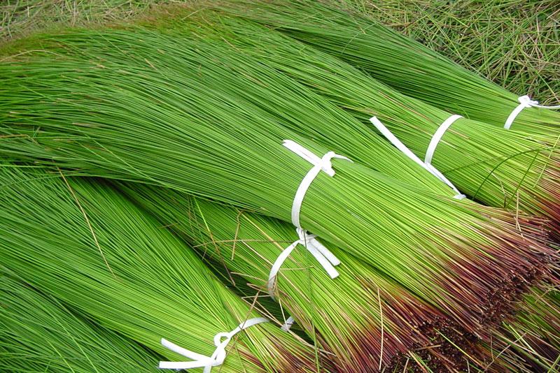 熊本産い草