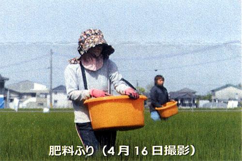 い草肥料ふり